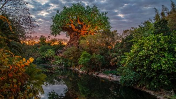 Sunrise at Animal Kingdom