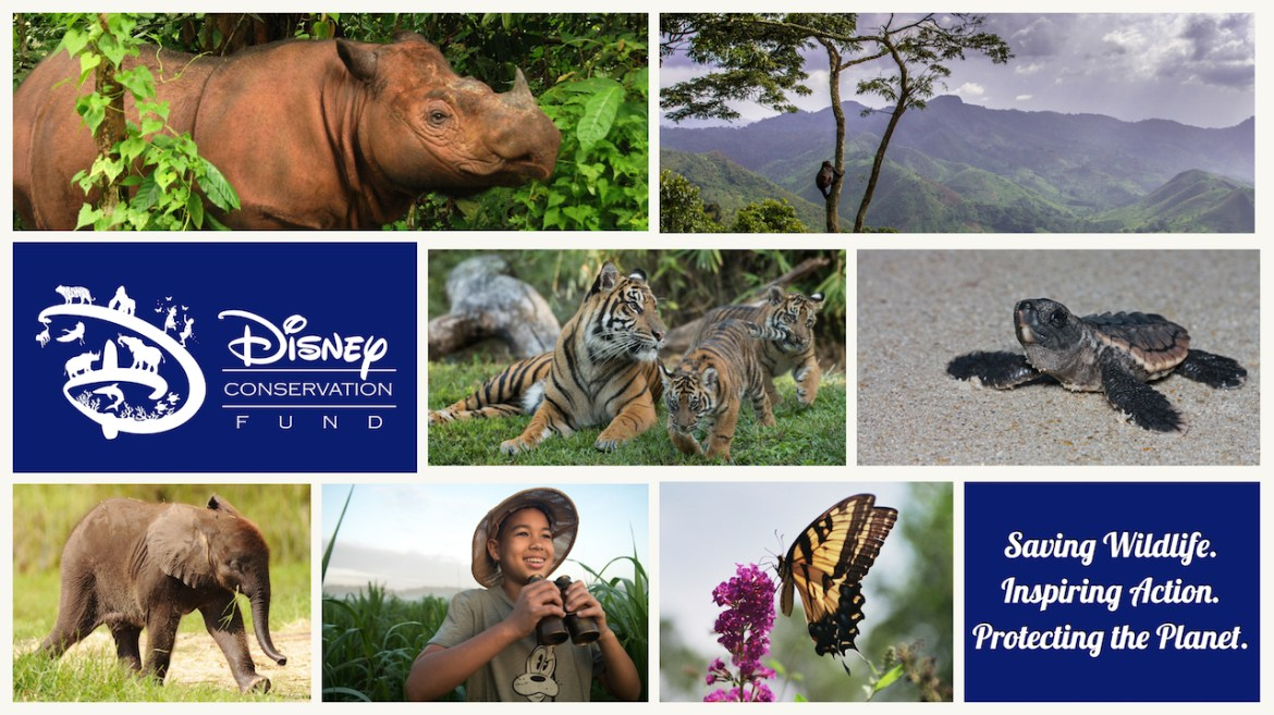 Disney Conservation Fund Donates $5 Million to Conservation Organizations