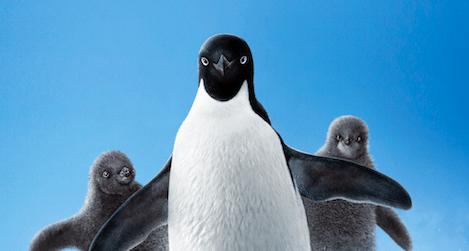 Disneynature's Penguins Coming Soon to a Theater Near You