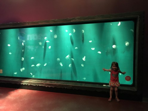 Discover the Fun of Sea Life Aquarium Orlando