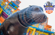New Sea Lion High Show Headed to SeaWorld Orlando