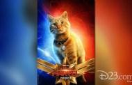 Meet Goose - Captain Marvel's Feline Sidekick