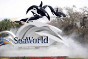 First Responders Half-Off Admission to SeaWorld Orlando, San Antonio and San Diego