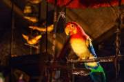 Disney SHUTS DOWN Rumors that the Enchanted Tiki Room is Leaving WDW
