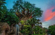 Disney's Animal Kingdom Guest Experience Team Starting Soon