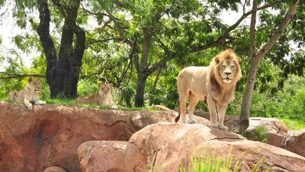 "Help ""Protect The Pride"" With Disney's Kilimanjaro Safari Expedition 2"