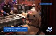 Disney Dogs Love Treats Too