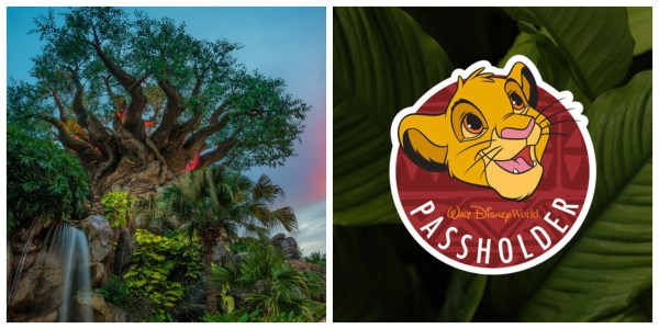 Special Annual Passholder offerings coming to the Animal Kingdom on August 29th 1