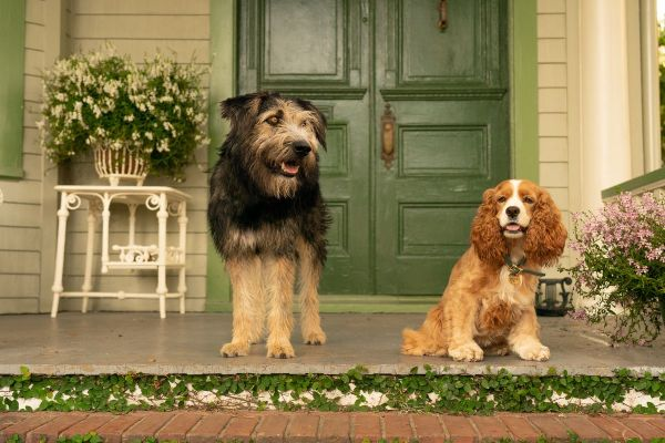 """Spoiler-Free Review of the Live Action """"Lady and the Tramp"""" on Disney+ 1"""
