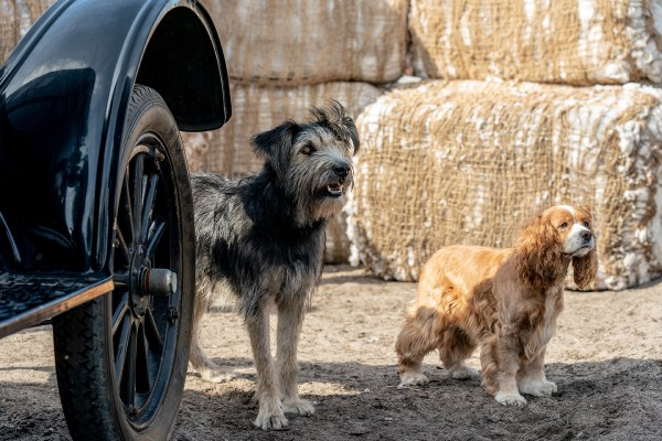 'Lady and The Tramp' Set Visit: What you Need to Know About Disney's Live-Action Remake 2