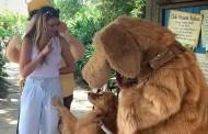 Service Dog Meets Dug at Walt Disney World and Melts Hearts