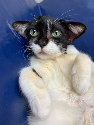Baby Yoda Cat Melts Hearts and Looking for New Home