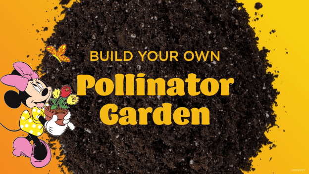 Learn How to Create a Pollinator Garden for Your Home