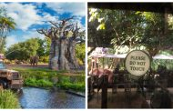 Social Distancing Measures on Kilimanjaro Safaris in Disney's Animal Kingdom