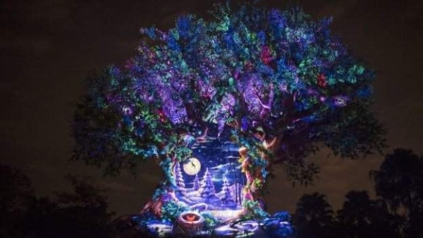 Animal Kingdom projections