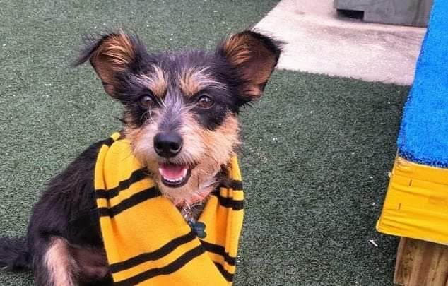 This Orlando Animal Shelter sorts their dogs into Hogwarts Houses