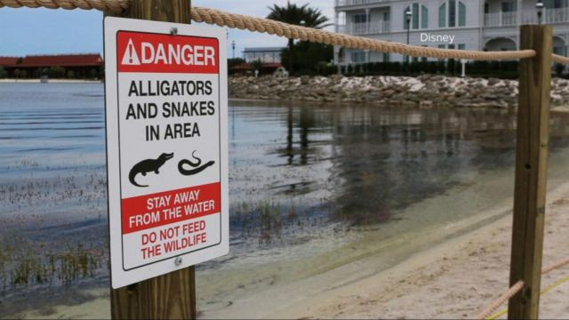 Disney has removed 250 Alligators from Disney World since Child's Death in 2016 3