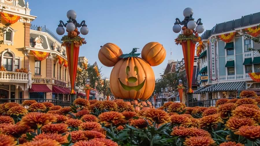 The giant Mickey Pumpkin has arrived at Disneyland