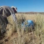 Evaluación del cultivo de forraje sembrado en los ayllus