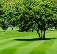landscaping link