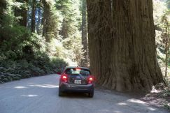 Jedediah Smith Redwoods State Park near Crescent City, CA
