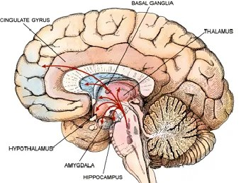 That Darned Amygdala: Just When You Thought You Knew It