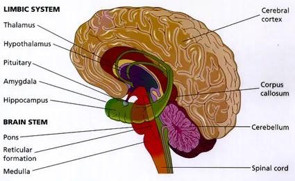 Psilocybin for depression