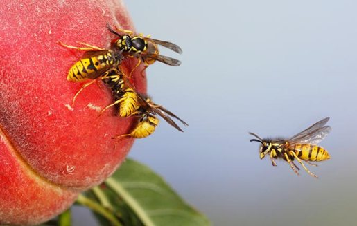 Important Questions about Wasps You Should Know the Answers to