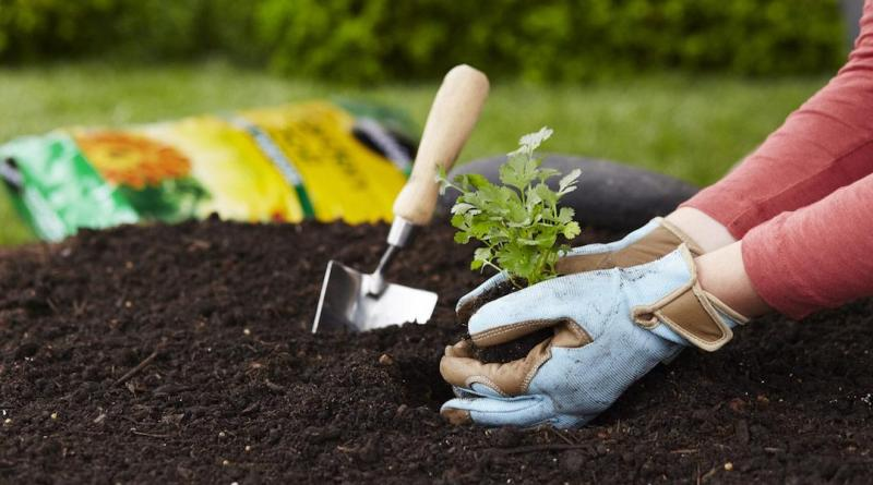 main10TopTipsimage Outdoor Growing Nutrients
