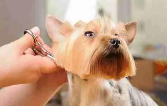 Pet Grooming Scissors Online