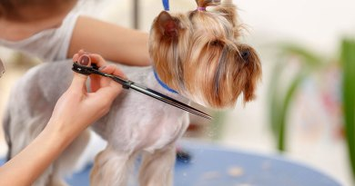 in home pet grooming Popular Window Types