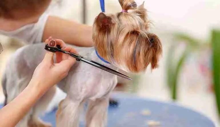 in home pet grooming Pet Grooming Scissors Online