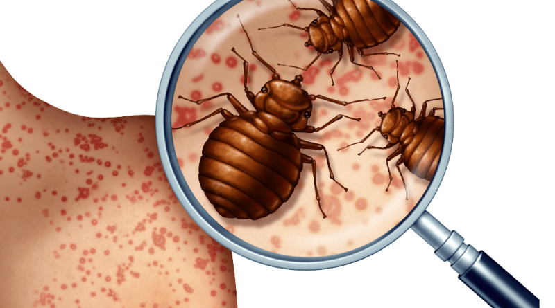 hn Bed Bug Infestation