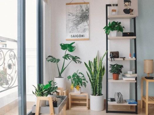 Benefits of Having Plants