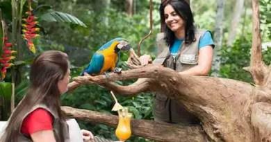 Let's Go Explore the Biggest Bird Park in Singapore!