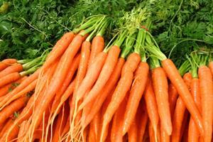carrots-200-300