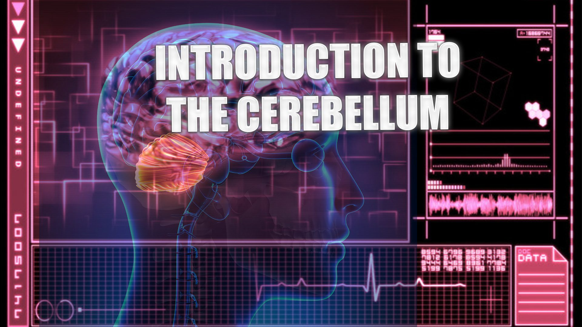 Introduction To The Cerebellum | El Paso, TX. | Part I