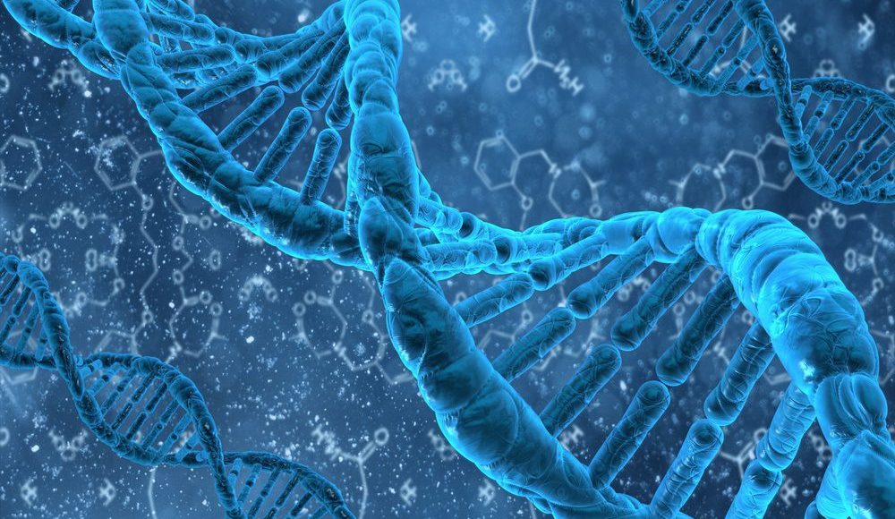 DNA Methylation Plasticity | El Paso, TX Chiropractor