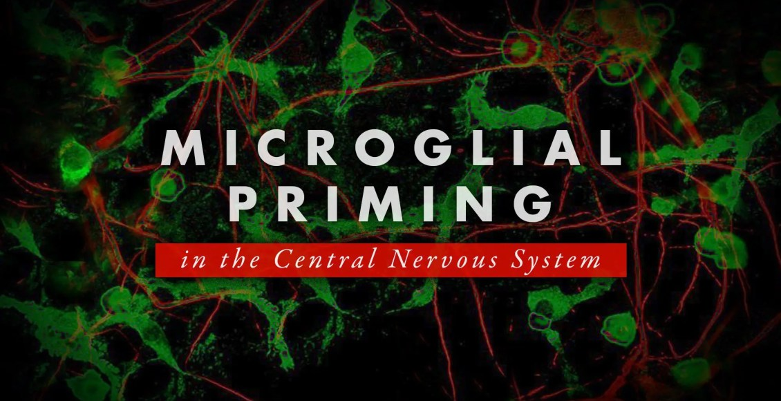Microglial Priming in the Central Nervous System   El Paso, TX Chiropractor