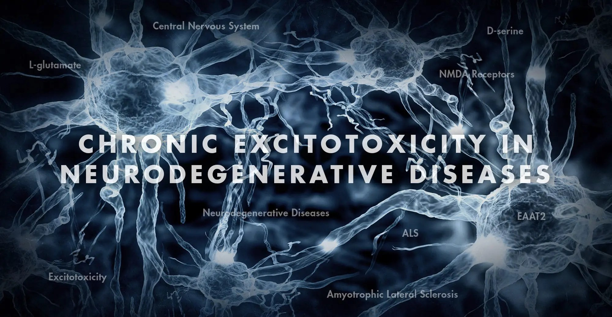 Functional Neurology: Chronic Excitotoxicity in Neurodegenerative Diseases Part 3