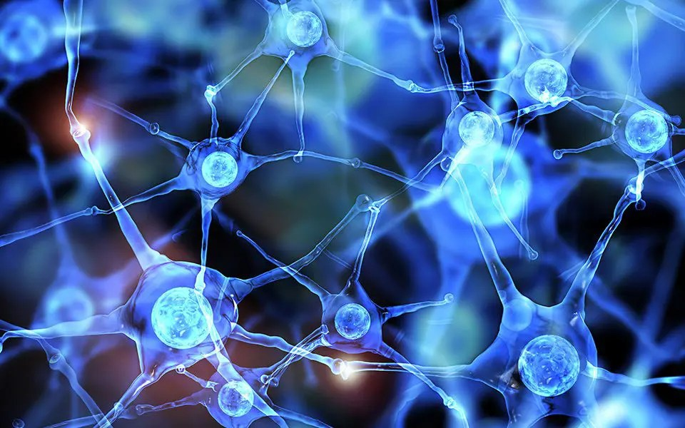 Functional Neurology: Differences Between Dopamine and Serotonin