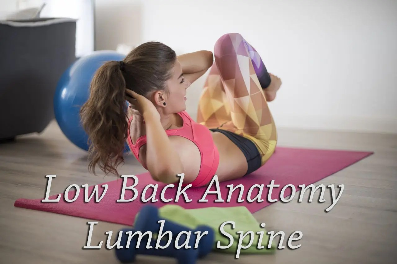Anatomy of the Lumbar Spine El Paso, Texas