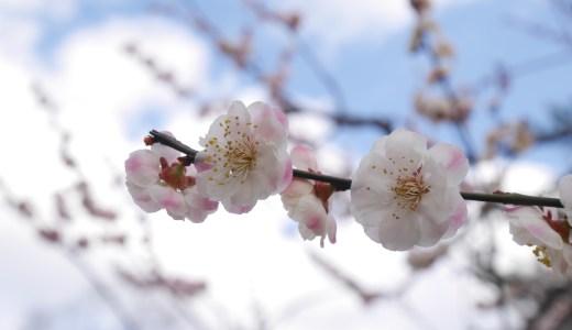 【京都】北野天満宮の