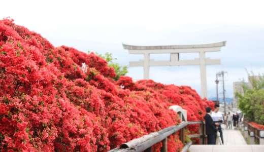 【京都観光】GW真っただ中に見頃。長岡天満宮の燃えるようなツツジは是非見てみたい!