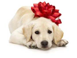 Should You Give Pets As Christmas Gifts?