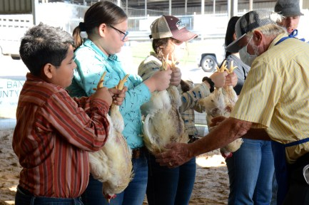 Meridian's Zoey Whitmer and her siblings hold out broilers broiler for Judge Kenneth Drews Thursday, June 4, during the 2020 Central Texas Youth Fair.