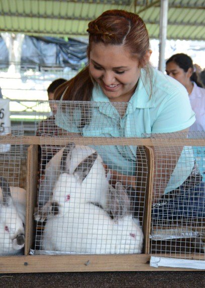Yadhira Enriquez prepares her rabbits for judging at the Market Rabbit Show at the 2020 Central Texas Youth Fair Thursday, June 4.