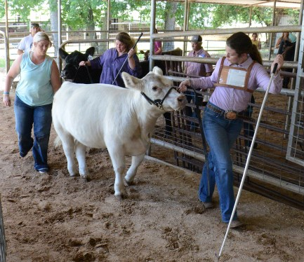 Kenadee Kuykendall's two heifers return to the ring for the Overall Championship round in l the 2020 Central Texas Youth Fair Heifer Jackpot Show for Bosque County residents only.
