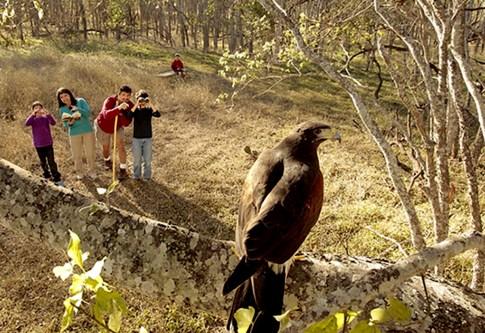 01-FEATUREDbirdwatchers