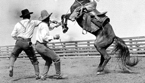 11-HorseBusting